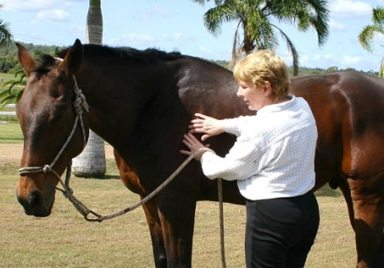 bowen-treatment-horses