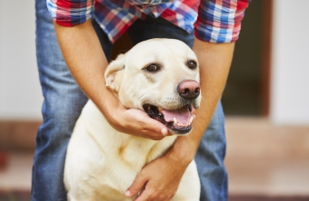 Craniolsacral Therapy for Animals