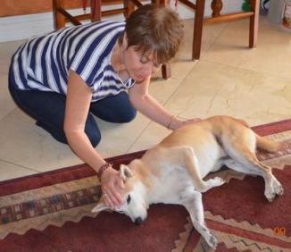 Quantum Touch for Animals