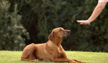dog-training-752x440