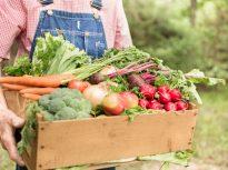 organic food3