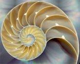 nautilus-shell2-200