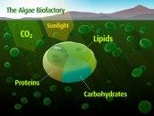 Bioage - algaebiofactory